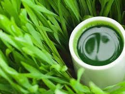 Greenpower. Disintossicati con il verde