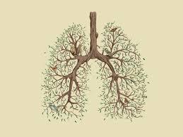 Difendi i tuoi polmoni da virus e batteri con la medicina cinese