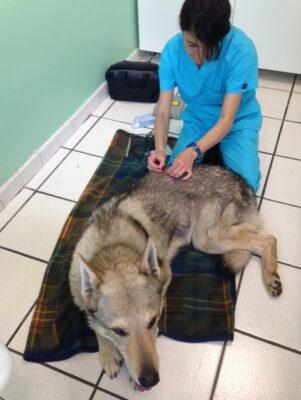cure omeopatiche in veterinaria