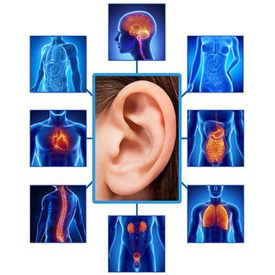 L'ansia il mal di pancia il nervo vago e l'auricoloterapia contro lo stress