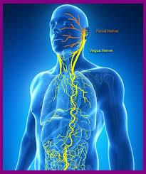 L'ansia, il mal di pancia, il nervo vago e l'auricoloterapia.
