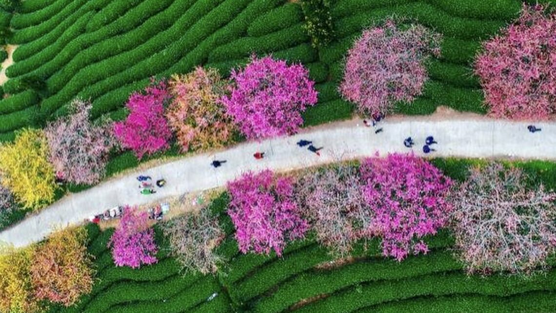 Otto alberi per dare il benvenuto alla primavera