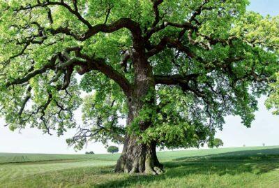 Otto alberi per dare il benvenuto alla primavera, rimedi per anima e corpo.