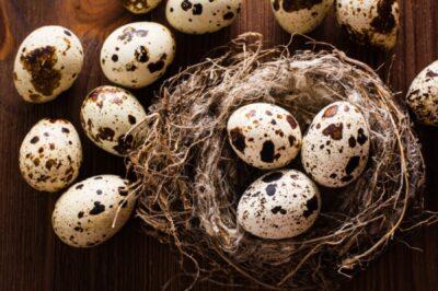 L'uovo semplice geniale sacro custode della rinascita. Tra biologia e miti