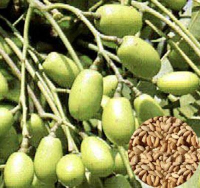 Dall'iperico al neem cinque oli toccasana da portare in vacanza