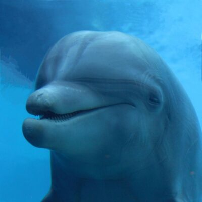 Il delfino amico dell'uomo ci guida verso l'amore e l'altruismo