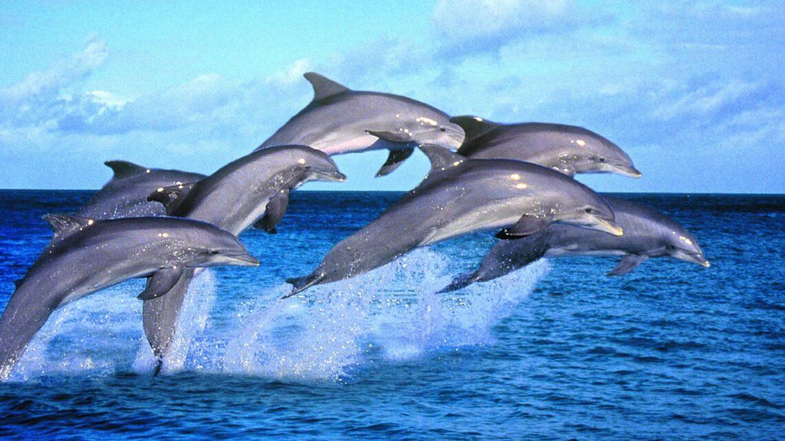 Il delfino, amico dell'uomo, ci guida verso l'amore e l'altruismo